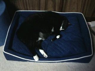 クロのベッド